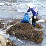 海人商会の海藻